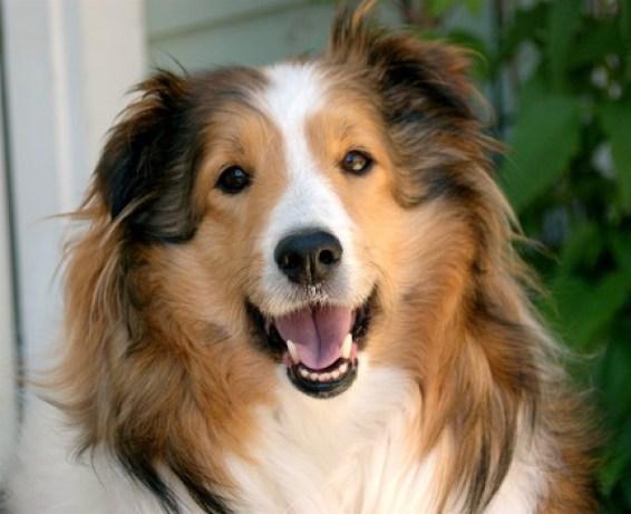 Cuidados para que los perros sean más felices y mejore nuestra relación con  ellos - Family DOG