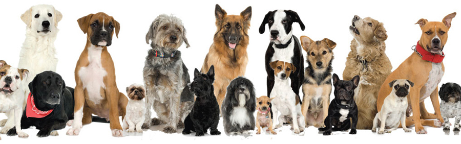 name dog multiple dogs pack center whole think things