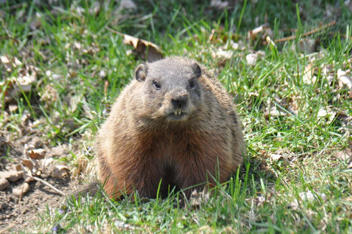 4 Cute Groundhog Day Activities For Kids