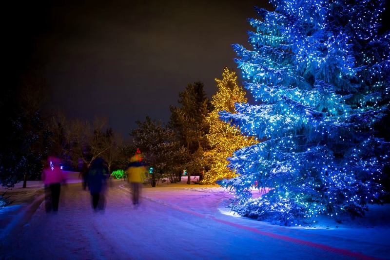 Calgary Zoo Lights Admission