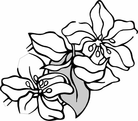 your free coloring pages are here a big variety