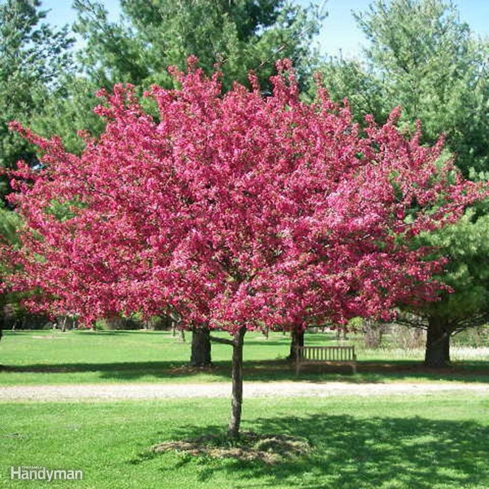 Great Trees To Consider Planting In Your Yard This Spring