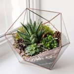12 Tips For Making A Diy Terrarium How To Build A Terrarium