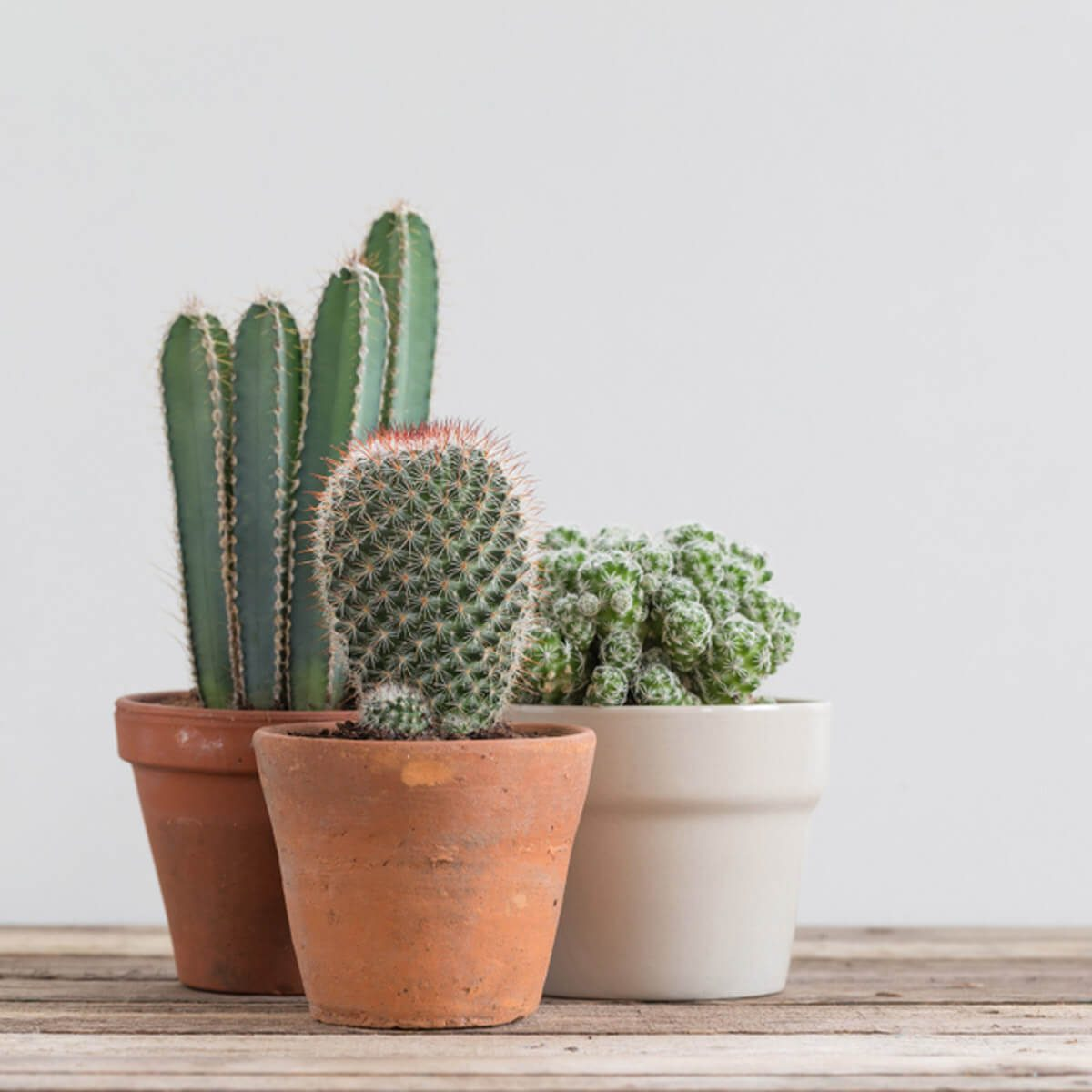 14 Ways To Decorate Your Home With Cactus The Family Handyman