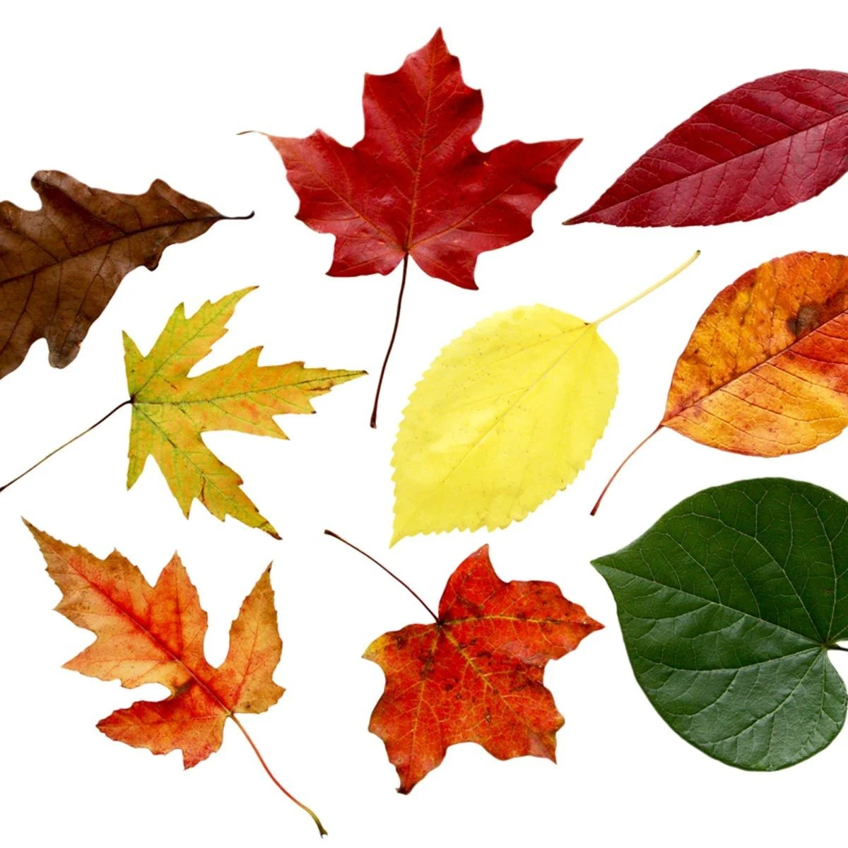 Tree Identification How To Identify Different Types Of Trees