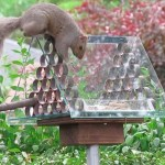 10 Ways To Prevent Squirrels From Reaching Birdseed