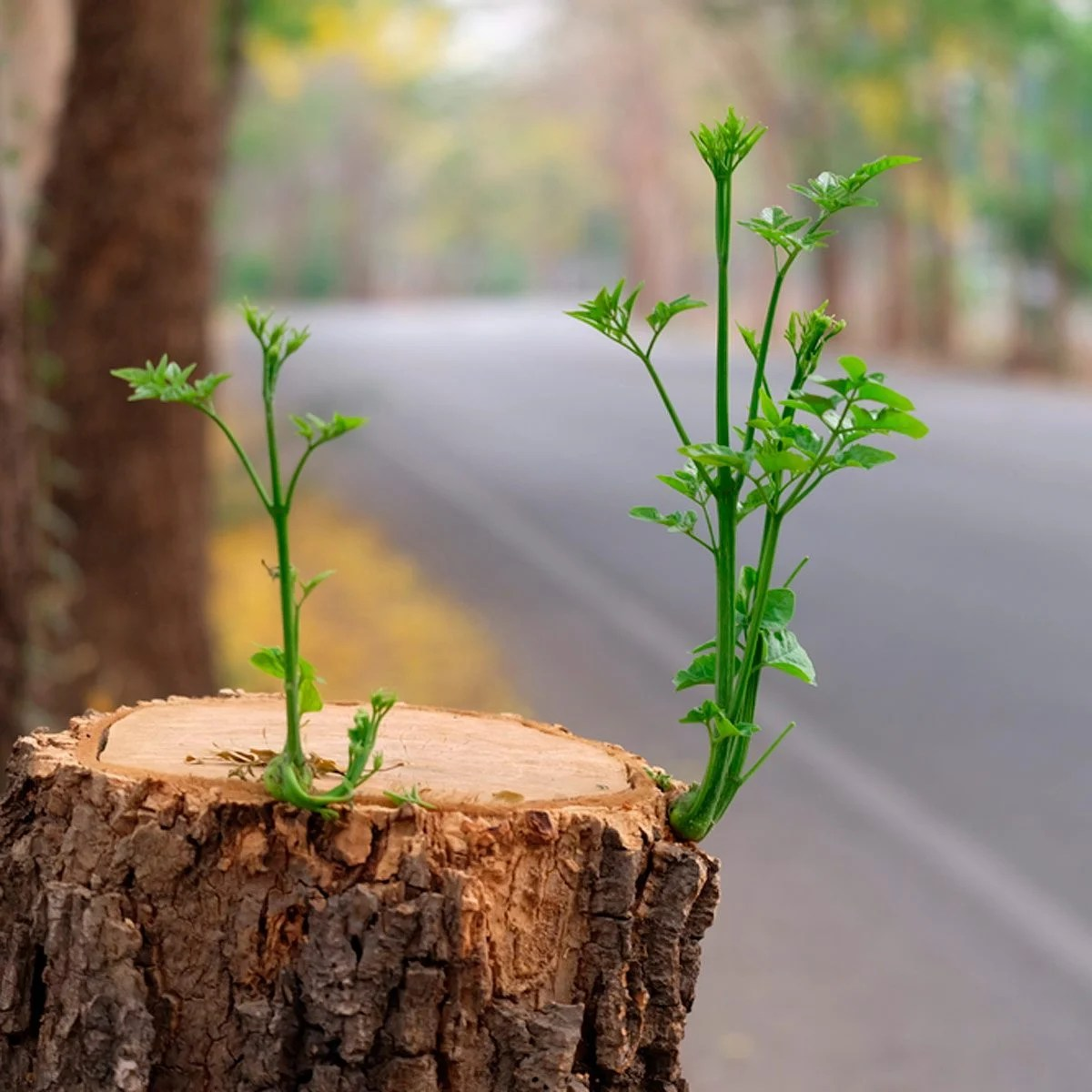 Remove A Tree Stump Yourself With This Common Household