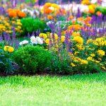 Our Favorite Flower Bed Ideas For Full Sun