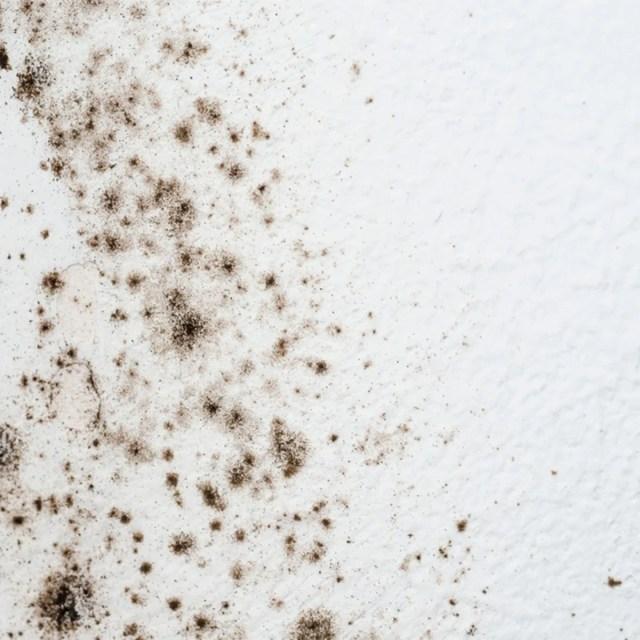 How to Get Rid of Mold on Bathroom Walls  Family Handyman