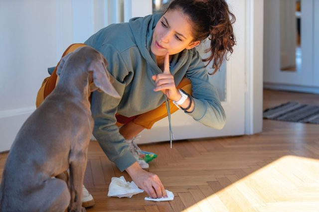 How To Get Dog Poop Out of Carpet, Wood & More  The Family Handyman
