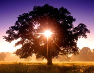 Image of the sun shining through a tree directly facing you with the sun behind it.