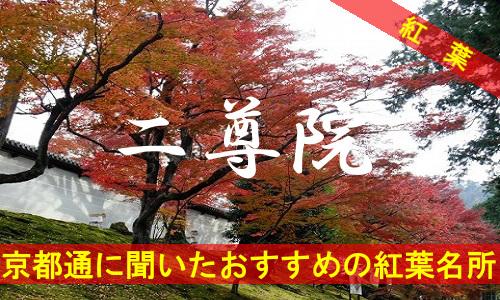kouyou-kyouto-nisonin-1774