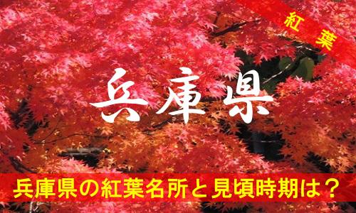 kouyou-hy-2818
