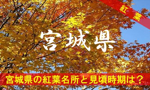 kouyou-mi-2119