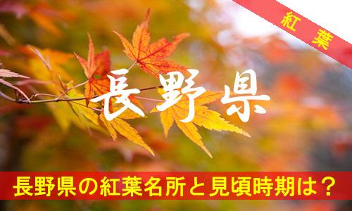 kouyou-na-2751