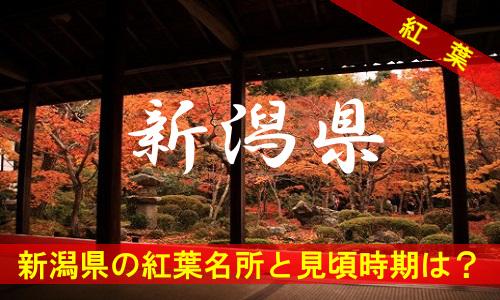 kouyou-ni-2683