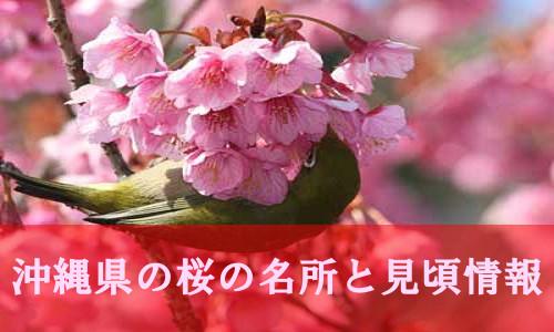 sakura-2-5838-1