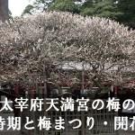 太宰府天満宮の梅の見頃時期と梅まつり・開花情報