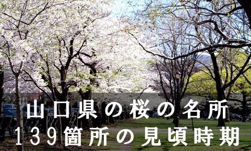sakura-10-6604