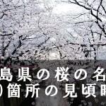 広島県の平和公園など桜名所110箇所の見頃時期