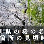 香川県の丸亀城跡など桜名所33箇所の見頃時期