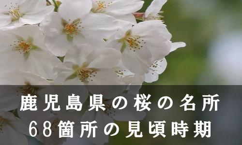 sakura-3-6562-1