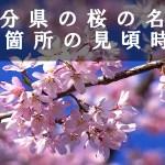 大分県の岡城址や一心寺など桜名所38箇所見頃時期