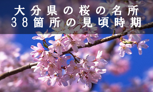 sakura-4-6568