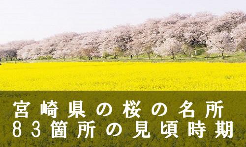 sakura-5-6573