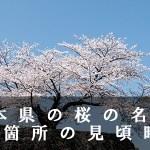 熊本県の一心行など桜の名所61箇所の見頃時期