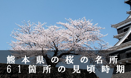 sakura-6-6577