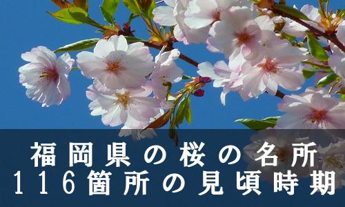 sakura-9-6592