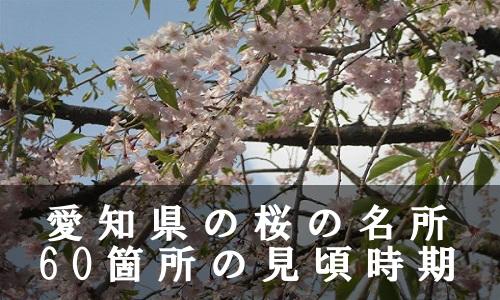 sakura-34-6866