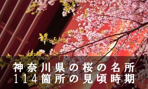 sakura-40-6905