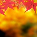 愛知県 鳳来寺山の紅葉狩り!見頃時期やアクセス情報・動画など