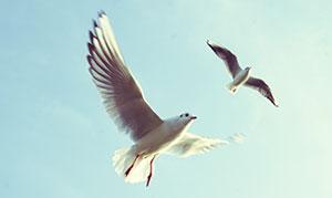 birdsfreedom