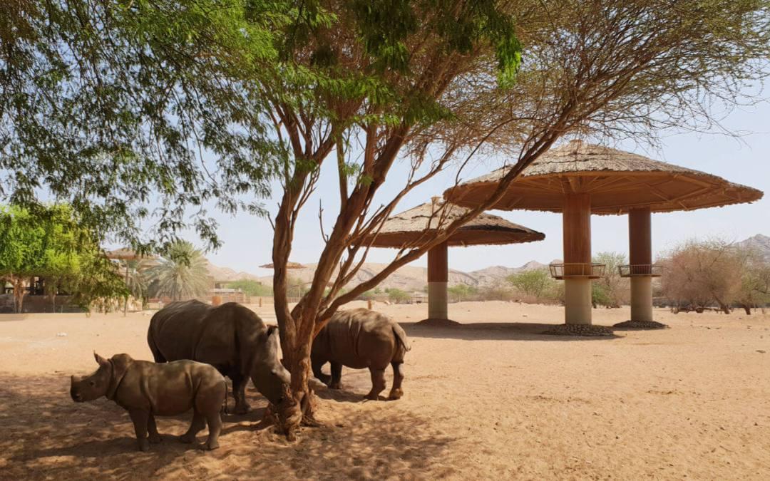 The African exhibit at Al Ain Zoo Abu Dhabi UAE
