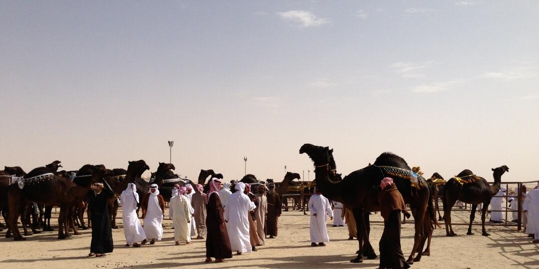 A beginners guide to attending the Al Dhafra Festival 2019