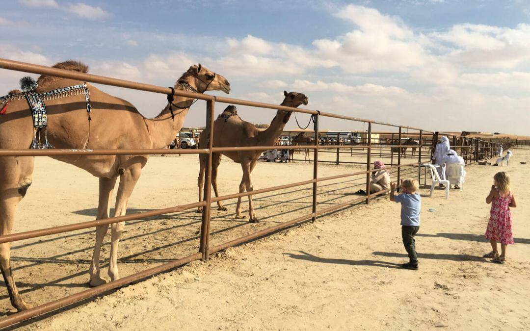 Kids coming to see the contestants in the next round of the camel Mazayna