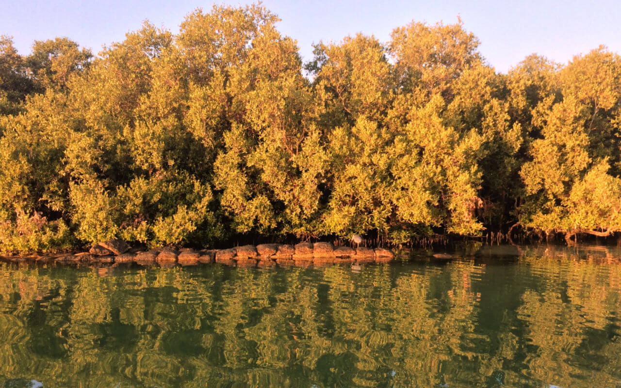 Eastern Mangroves