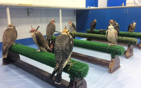 Abu Dhabi Falcon Hospital patients