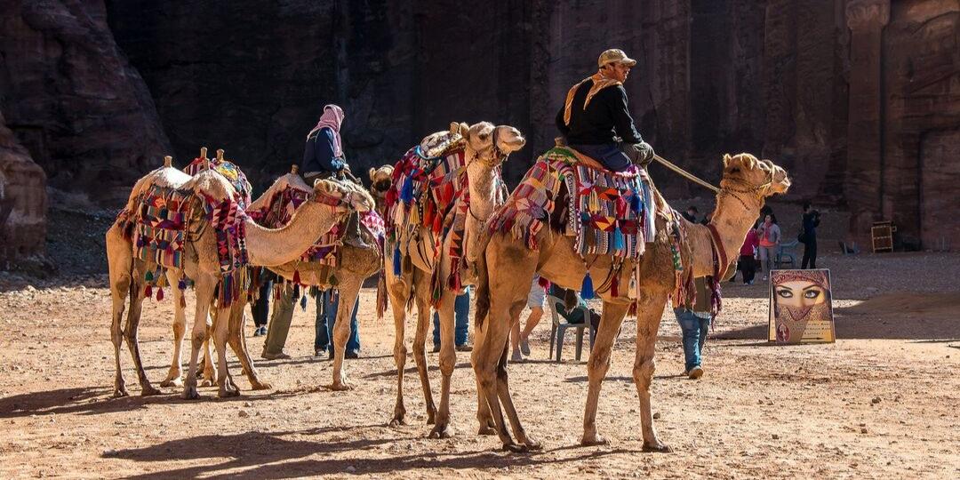 Jordan Camels in Petra