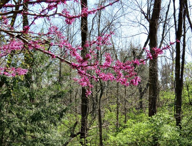 Early Spring in Kentucky