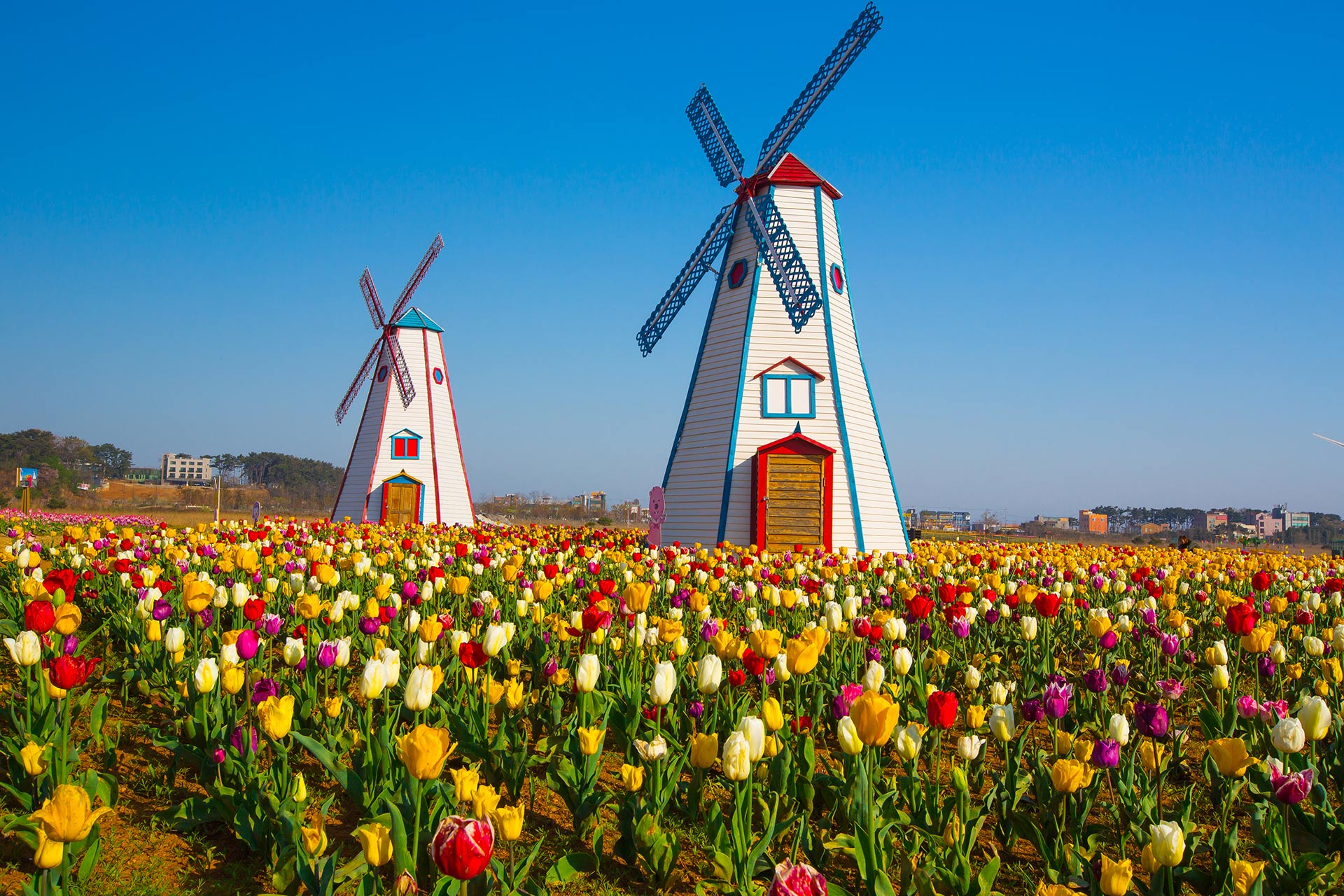 Holland, michigan; Courtesy of Holland MI CVB
