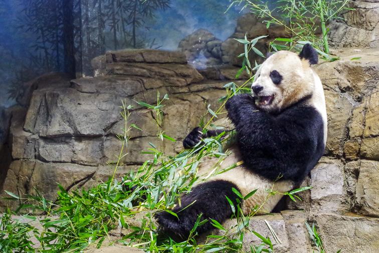 Washington, D.C. National Zoo; Courtesy of Washington.org
