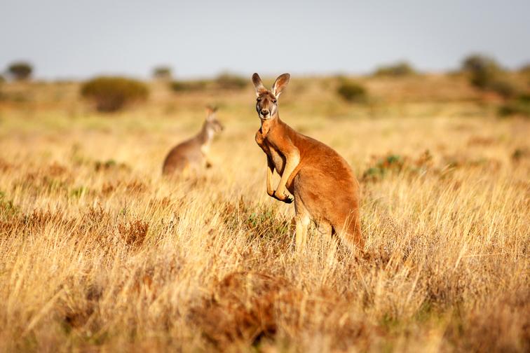 Australia's Outback; Courtesy of Luke Shelley/Shutterstock