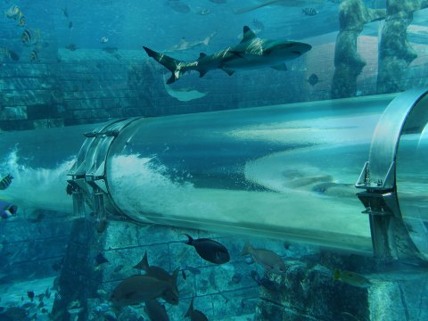 Leap of Faith Waterslide at Aquaventure at Atlantis The Palm; Courtesy of Atlantis The Palm