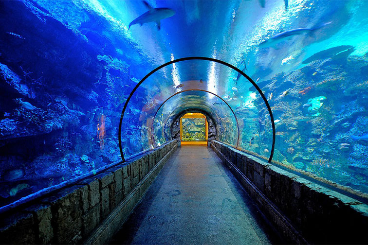 The Shark Reef Aquarium at the Mandalay Bay in Las Vegas; Courtesy of Mandalay Bay