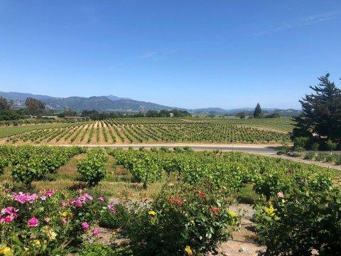 Coppola Winery; Courtesy of TripAdvisor Traveler noellei777