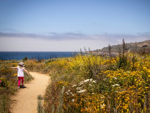 A little girl walks on a trail surrounded by yellow wildflowers at Garrapata State Park in Monterey, California; Courtesy of RS Smith Photography/Shutterstock